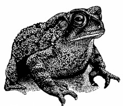 crapaud-t15725.jpg